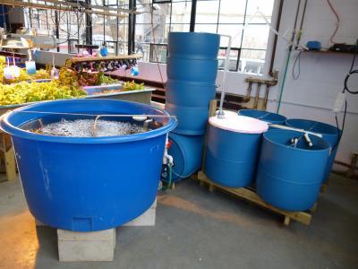 New integrated building model may improve fish farming for Catfish aquaponics