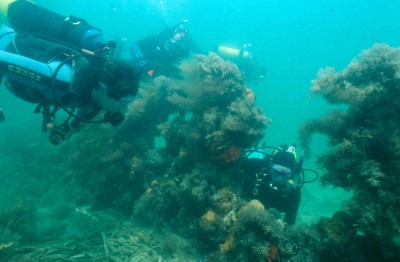 Divers on the Clarence shipwreck.