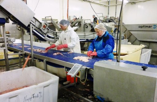 Skrei fever hits Norway as Arctic cod spawn