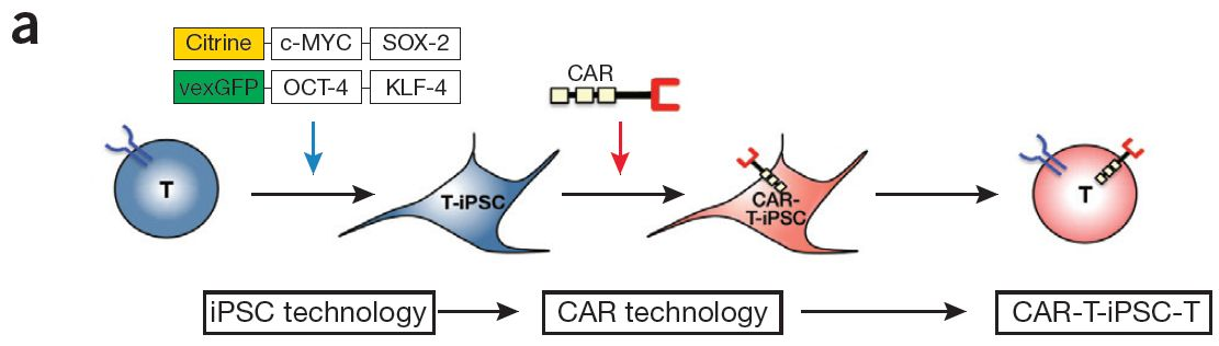 Gene therapy for cancer+research paper