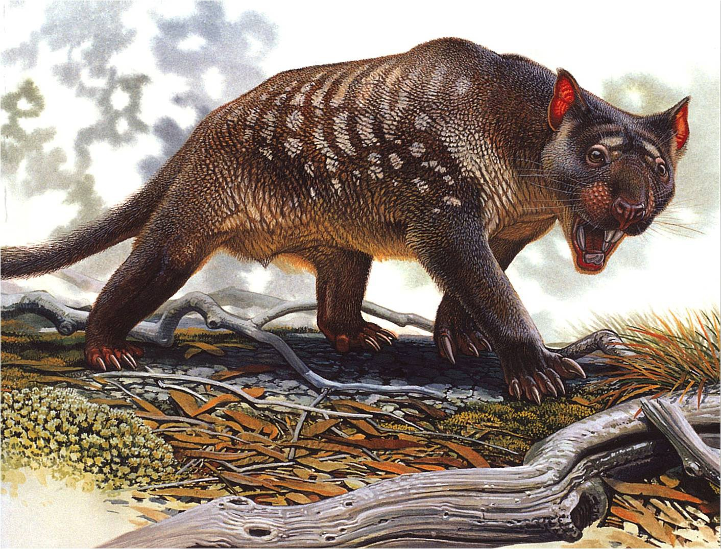 Climate not to blame for megafauna extinction in Australia