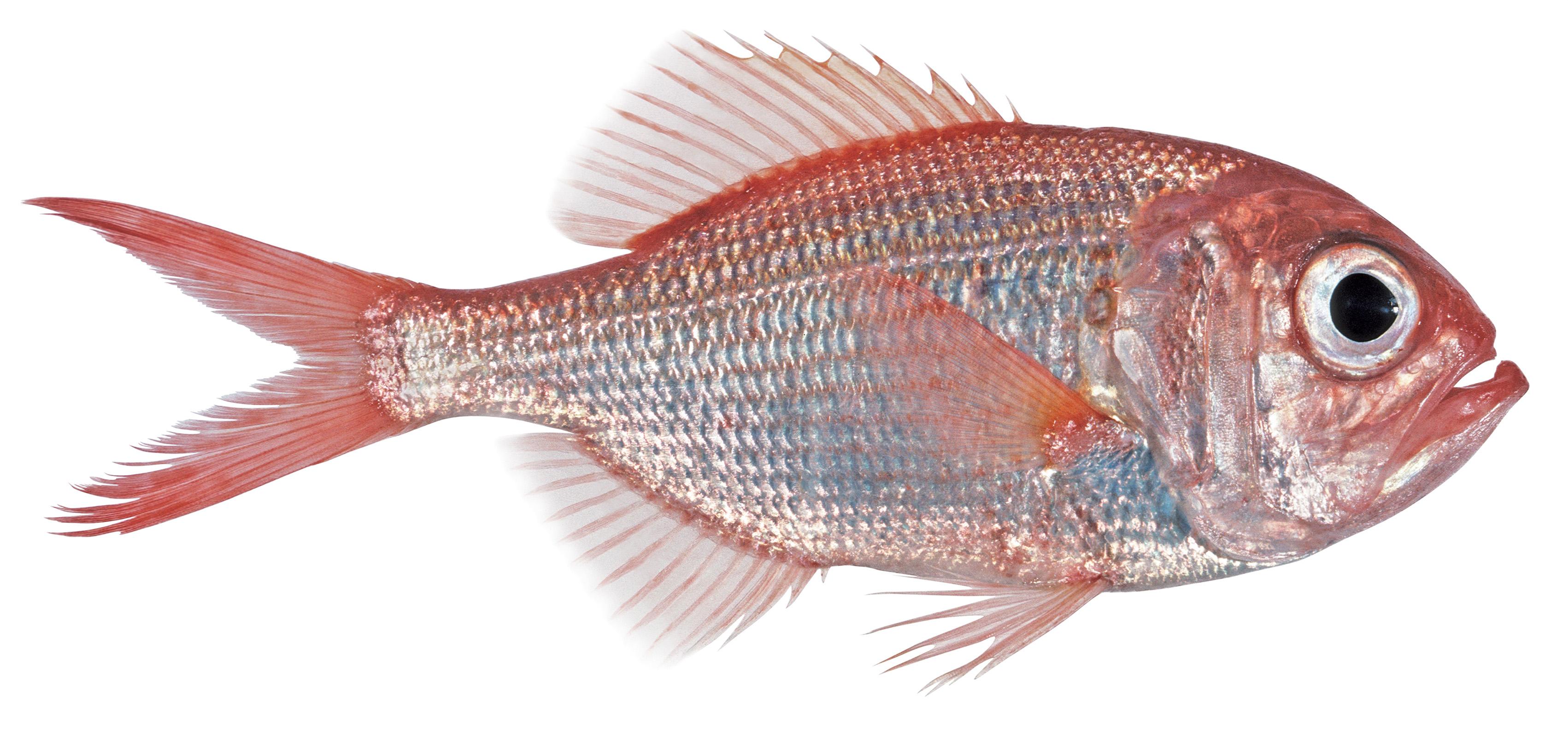 2-somanyfishon.jpg