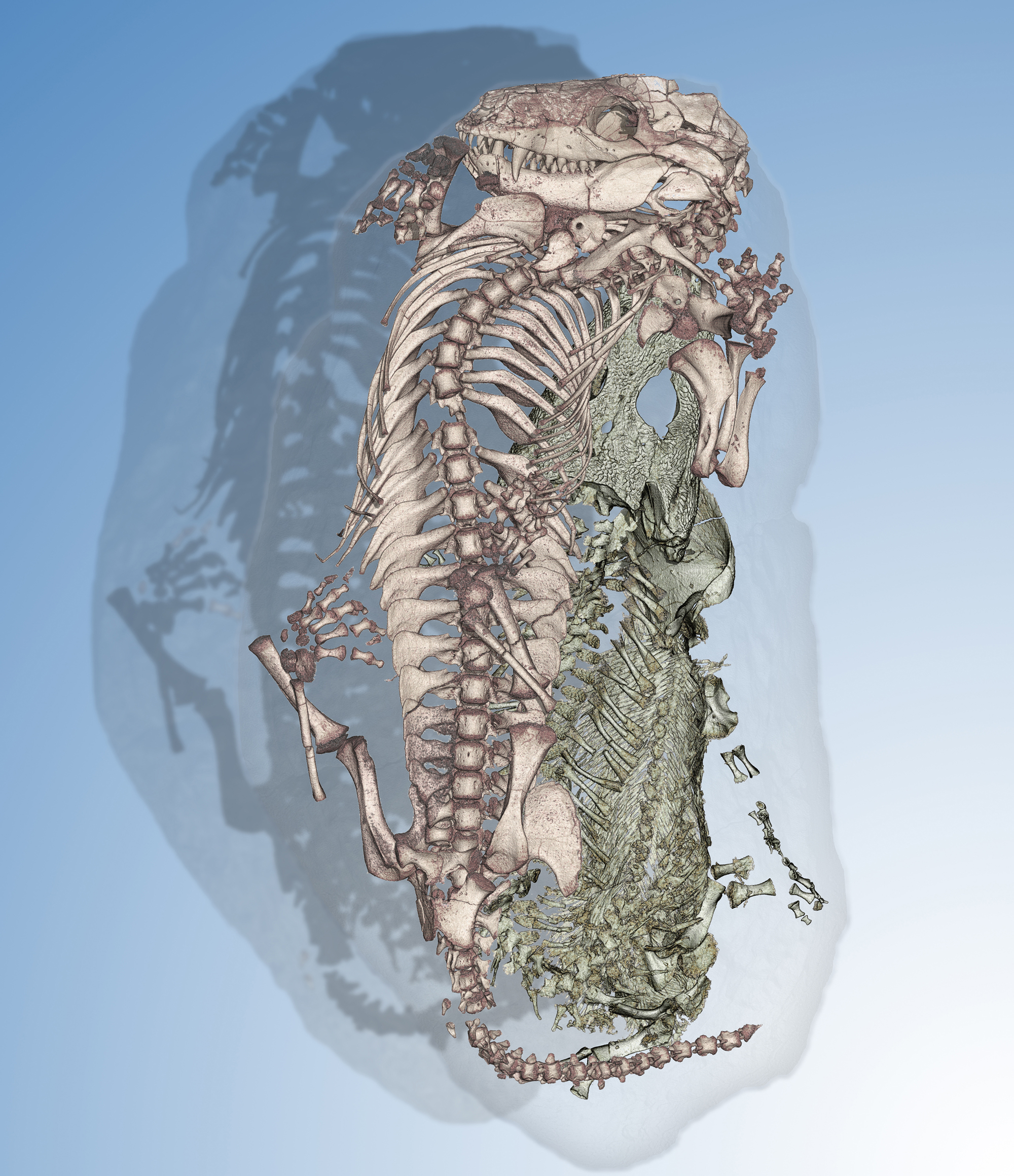 This image shows a mammal like reptile nestled with a primary aquatic amphibian. Credit: ESRF V. Fernandez