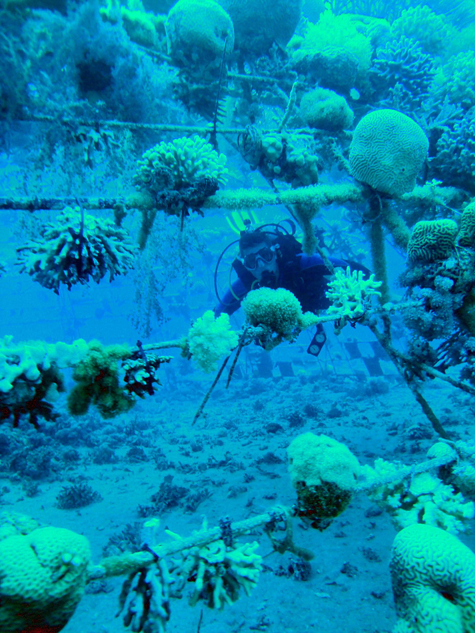 Sulfurous chemical known as 'smell of the sea' serves as ...