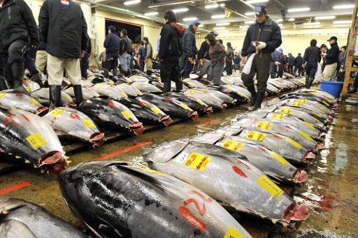 Atlantic tuna quotas unchanged for 2014 for Sushi grade fish market