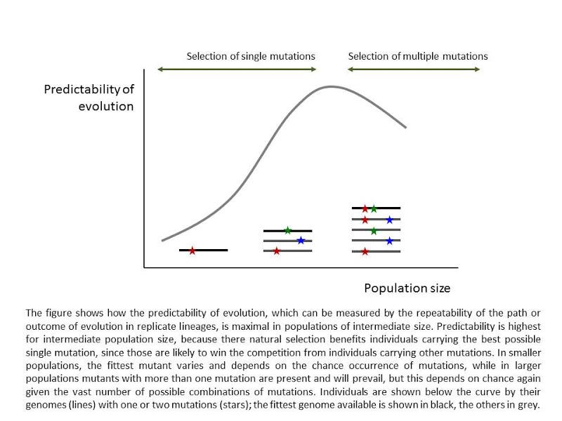 Evolution Population Size Optimal Population Size Allows