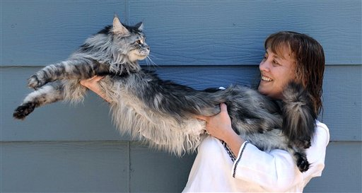 Longest Cat In The World 2013