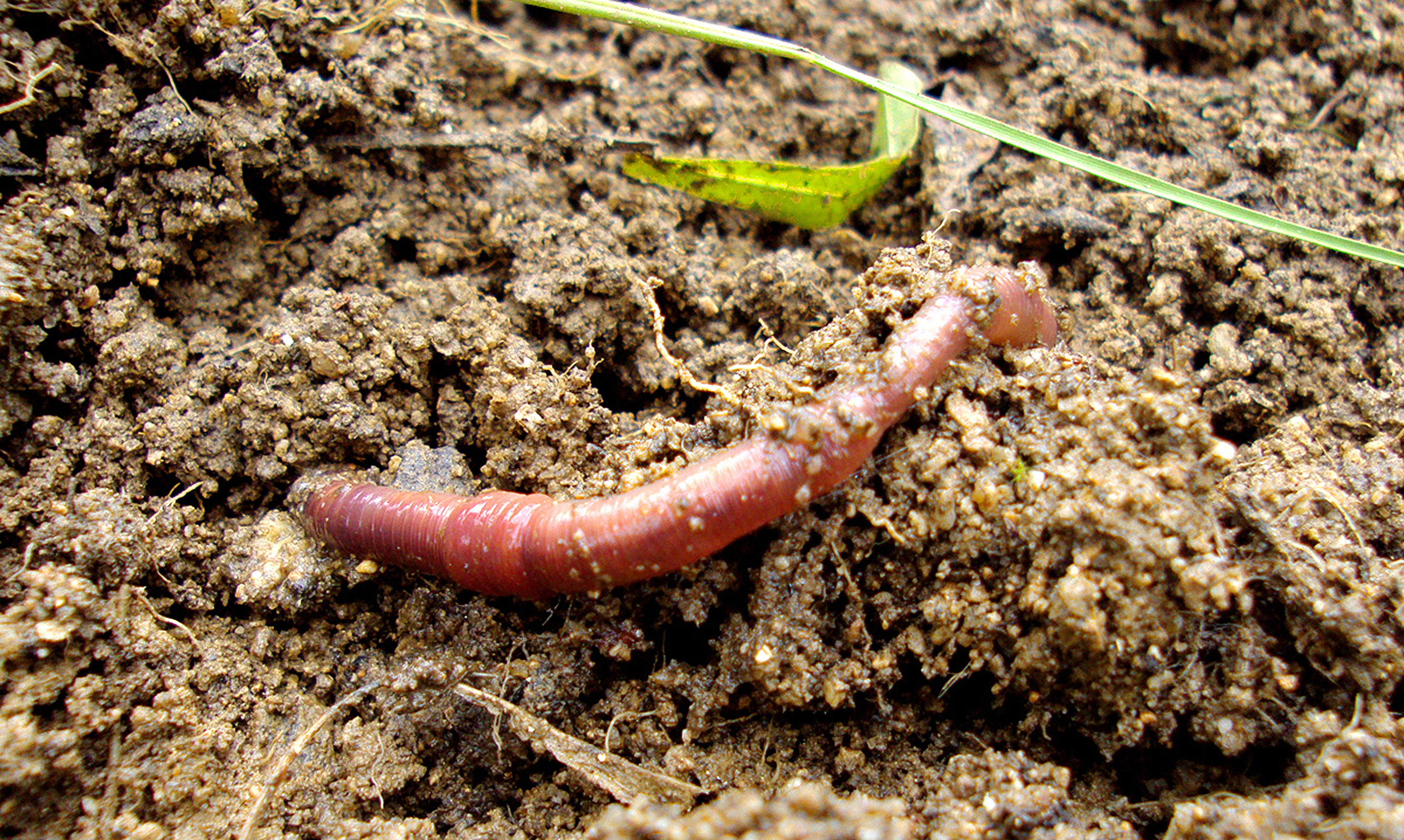 how to kill worms in plant soil