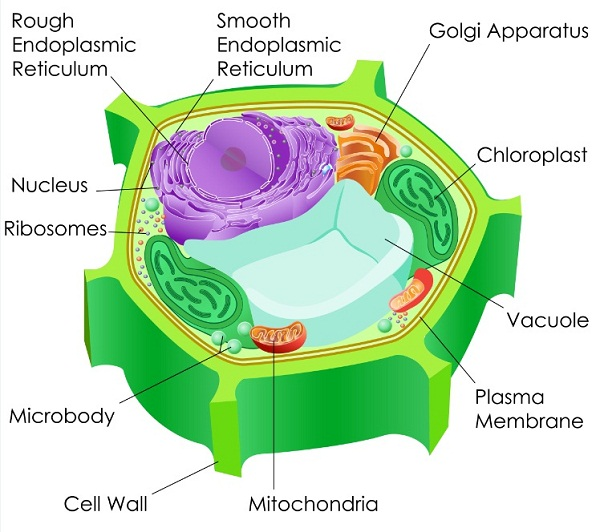 Organelles join mitochondria in signalling pathways creation
