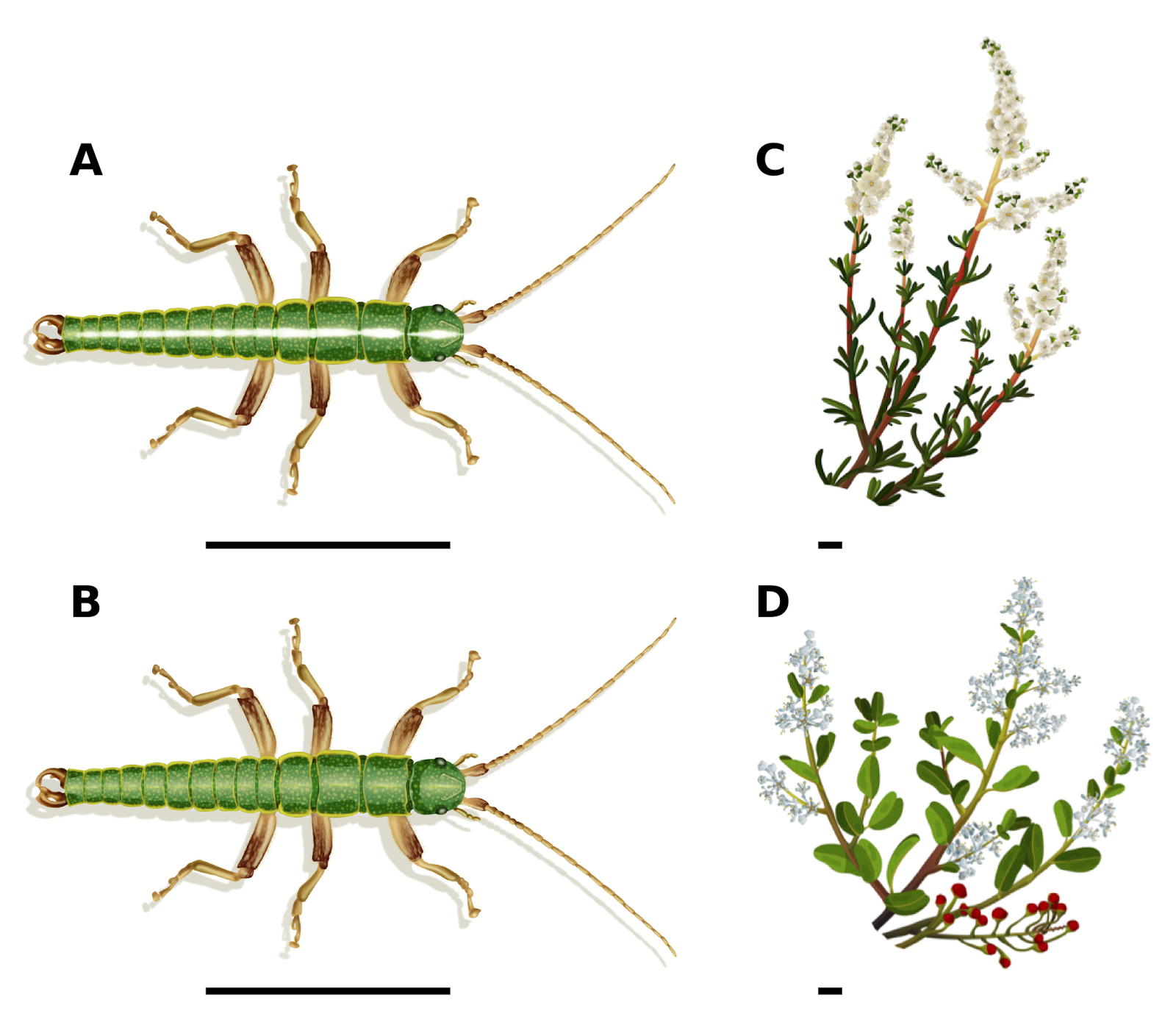 how to find stick insects