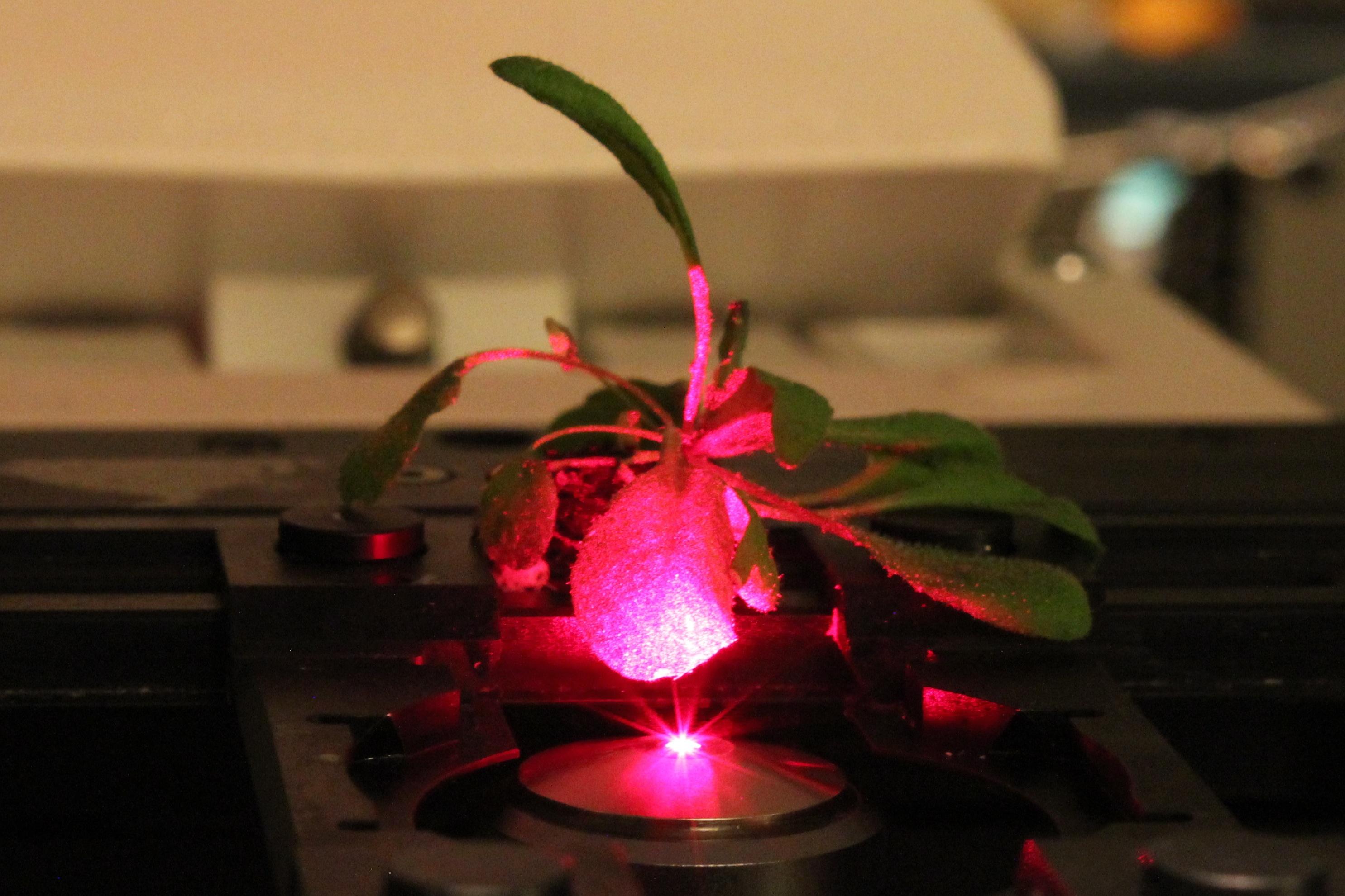 Les plantes bioniques sont l'avenir de l'homme (?)