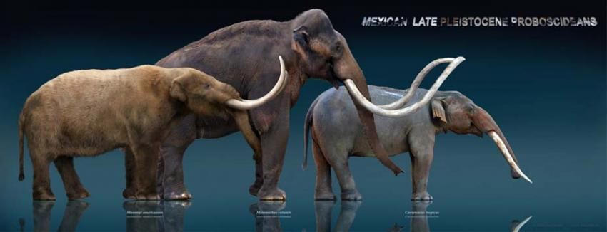 Meet the gomphothere: Archaeologists discover bones of ...