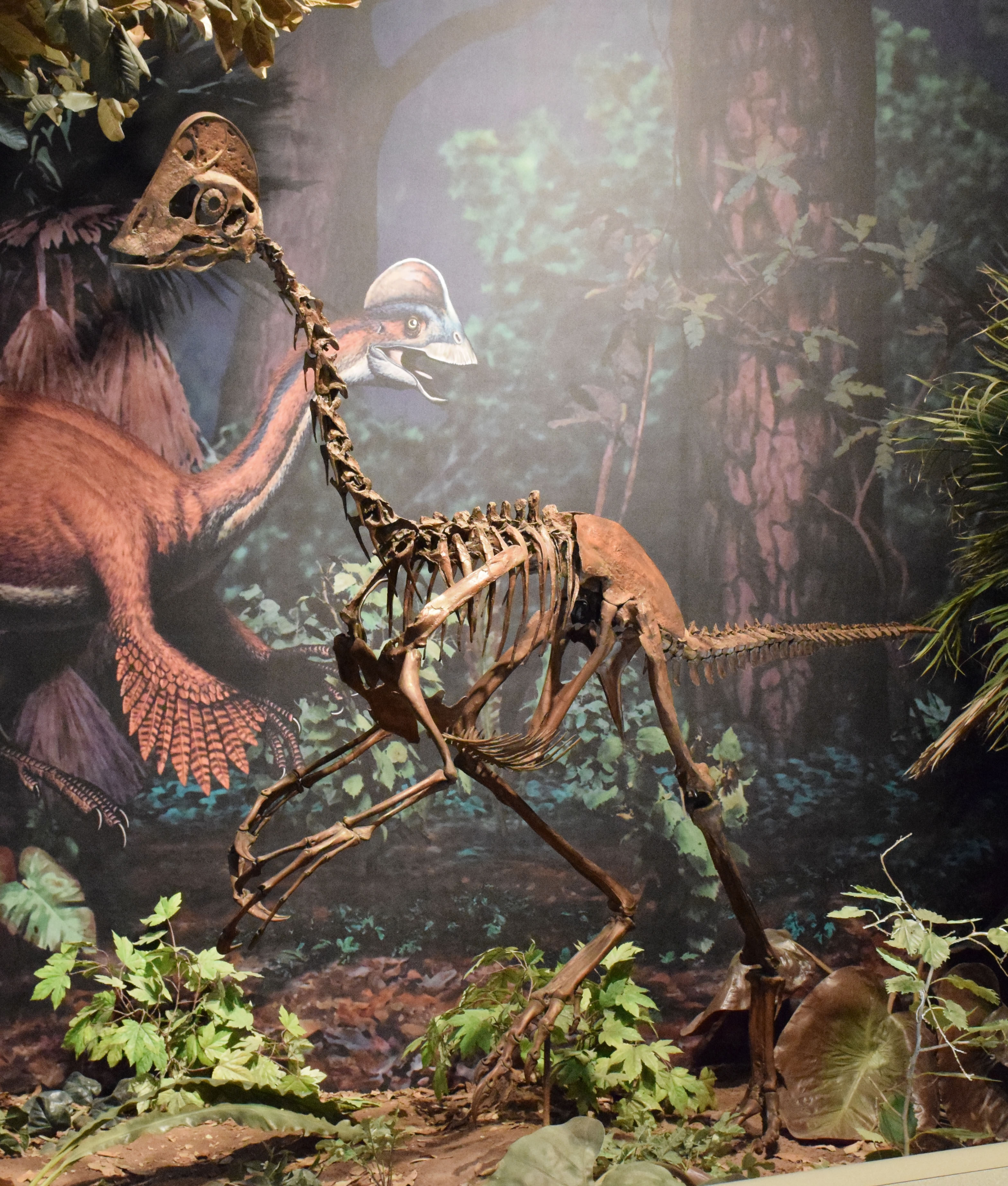 A Chicken From Hell Dinosaur Large Feathered Dinosaur