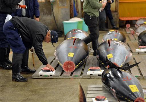 Bluefin tuna price slumps at japan auction for Tuna fish price
