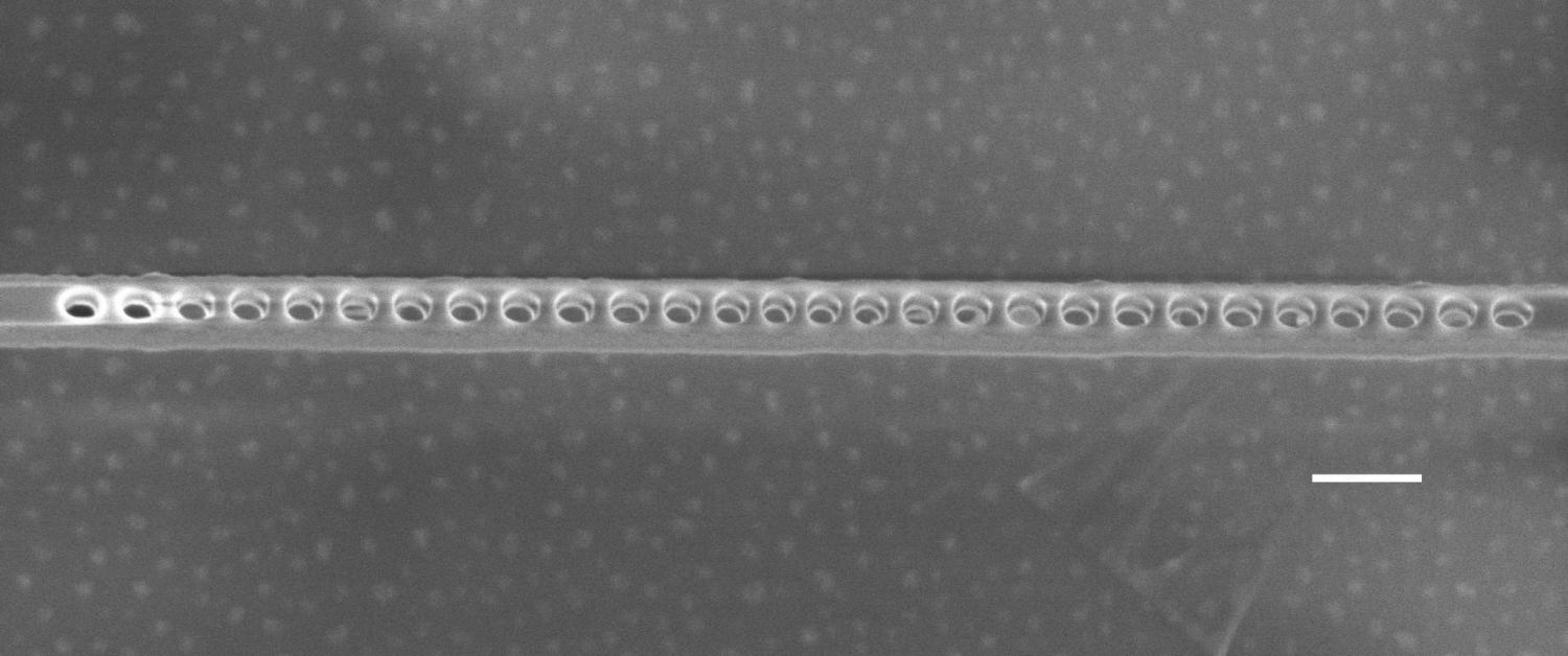 A qubit candidate shines brighter