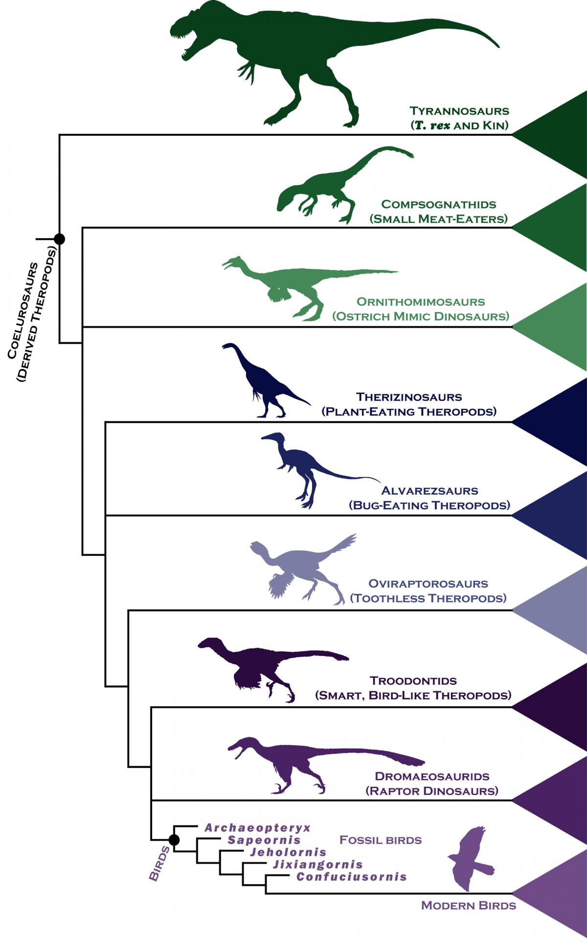Dinosaur Eating Trees Dinosaur Family Tree Gives