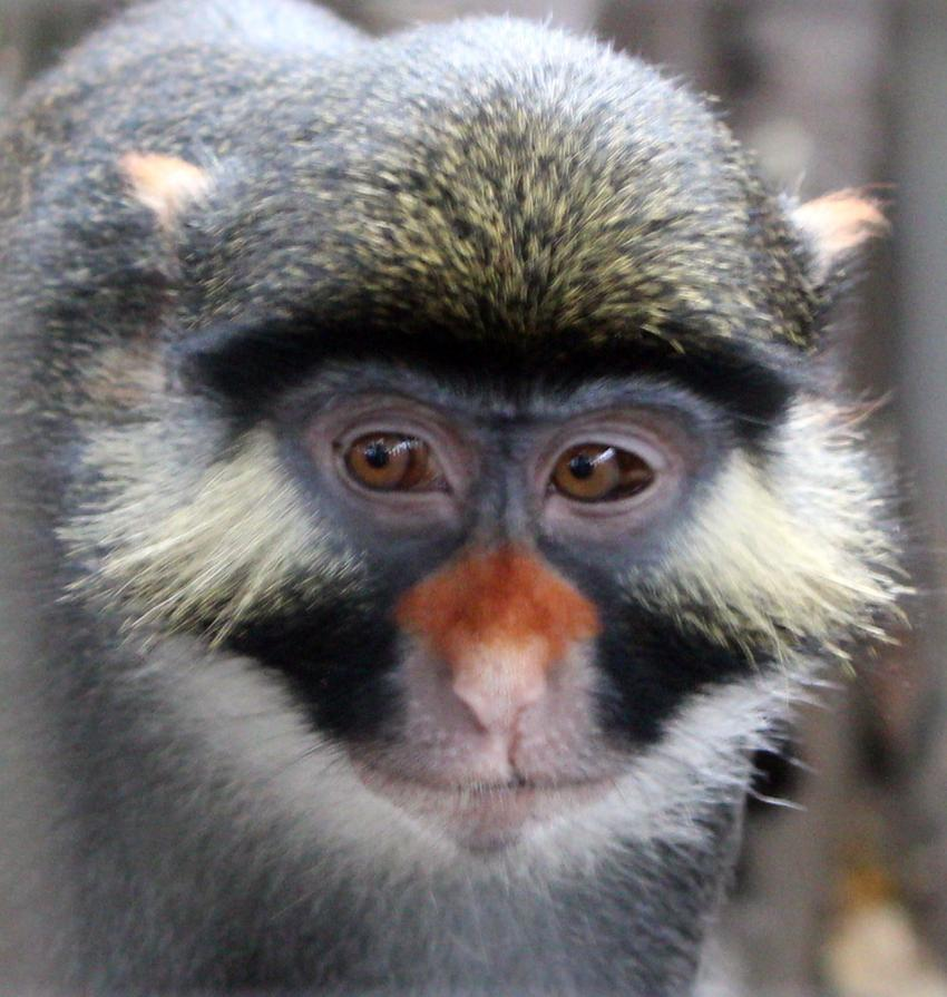 an analysis of the diet and primate evolution C dietary plasticity—primates eat a highly varied diet,  differences have occurred through evolution ii living primates provide  dna analysis demonstrates .