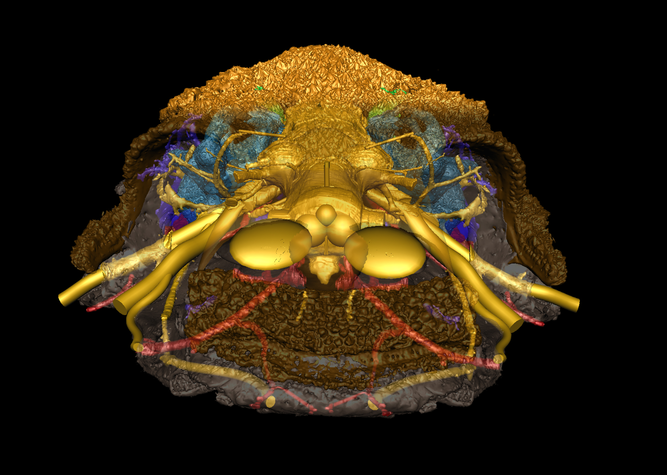 Skull With Jaw Dropped: Fossil Fish Offers Clues To Jawed Vertebrates Origins
