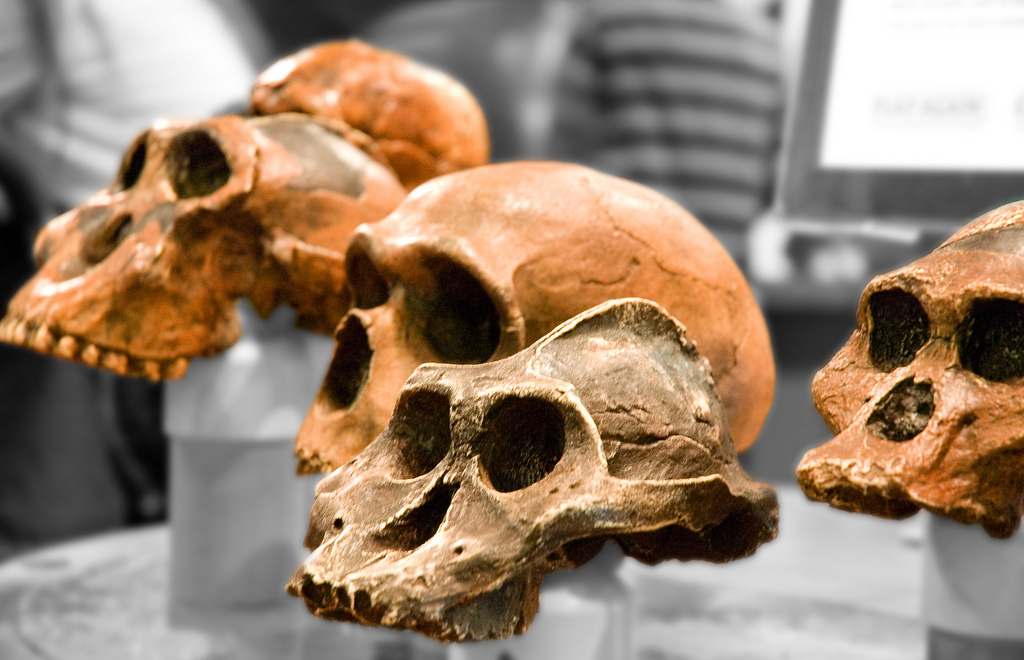 Жизнь на Земле предпочитает эволюцию креационизму