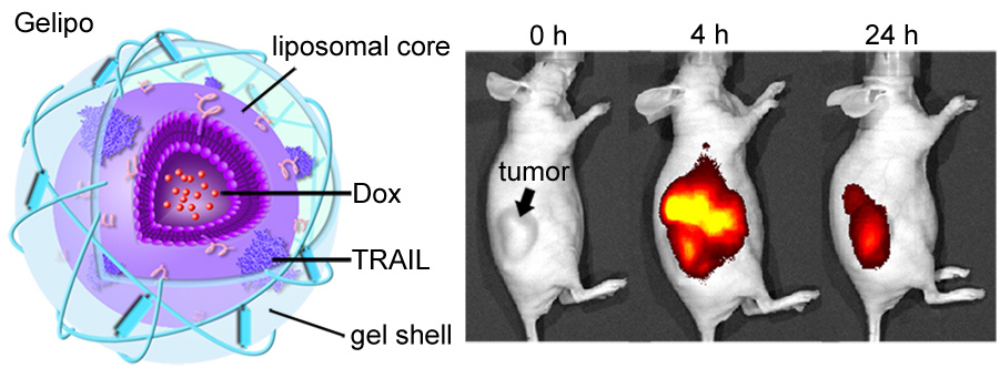 New technique targets specific areas of cancer cells with ...