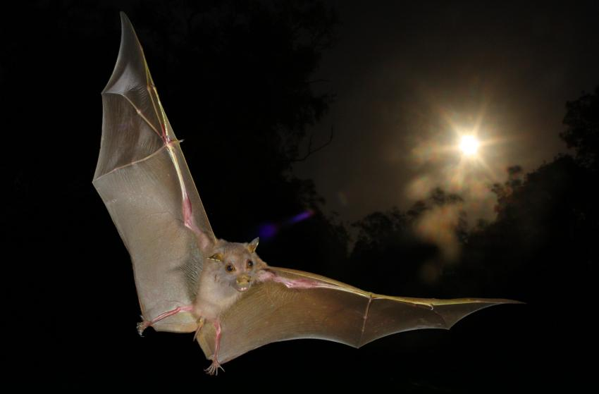 echolocation the world through a bat's About the world of bats through their echolocation calls bats harbor many secrets  they have yet to give up this was strongly reaffirmed in my mind as i lis.