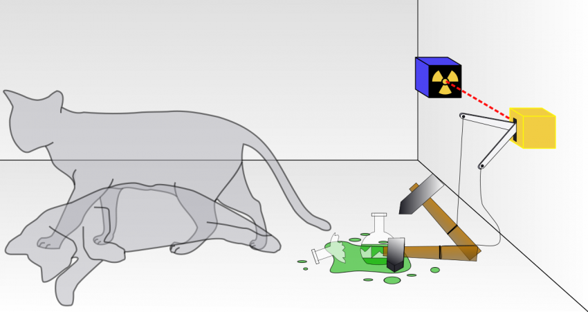 Cat research paper. Help Me?