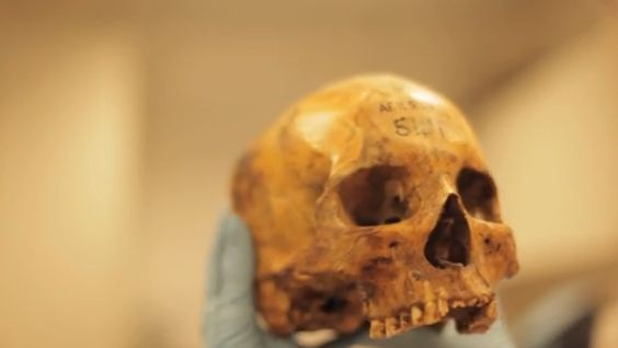 Ancient bone fragments help describe diet, health of Saharan ancestors