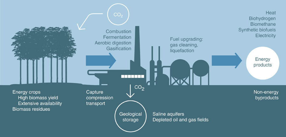Electricity From Biomass With Carbon Capture Could Make