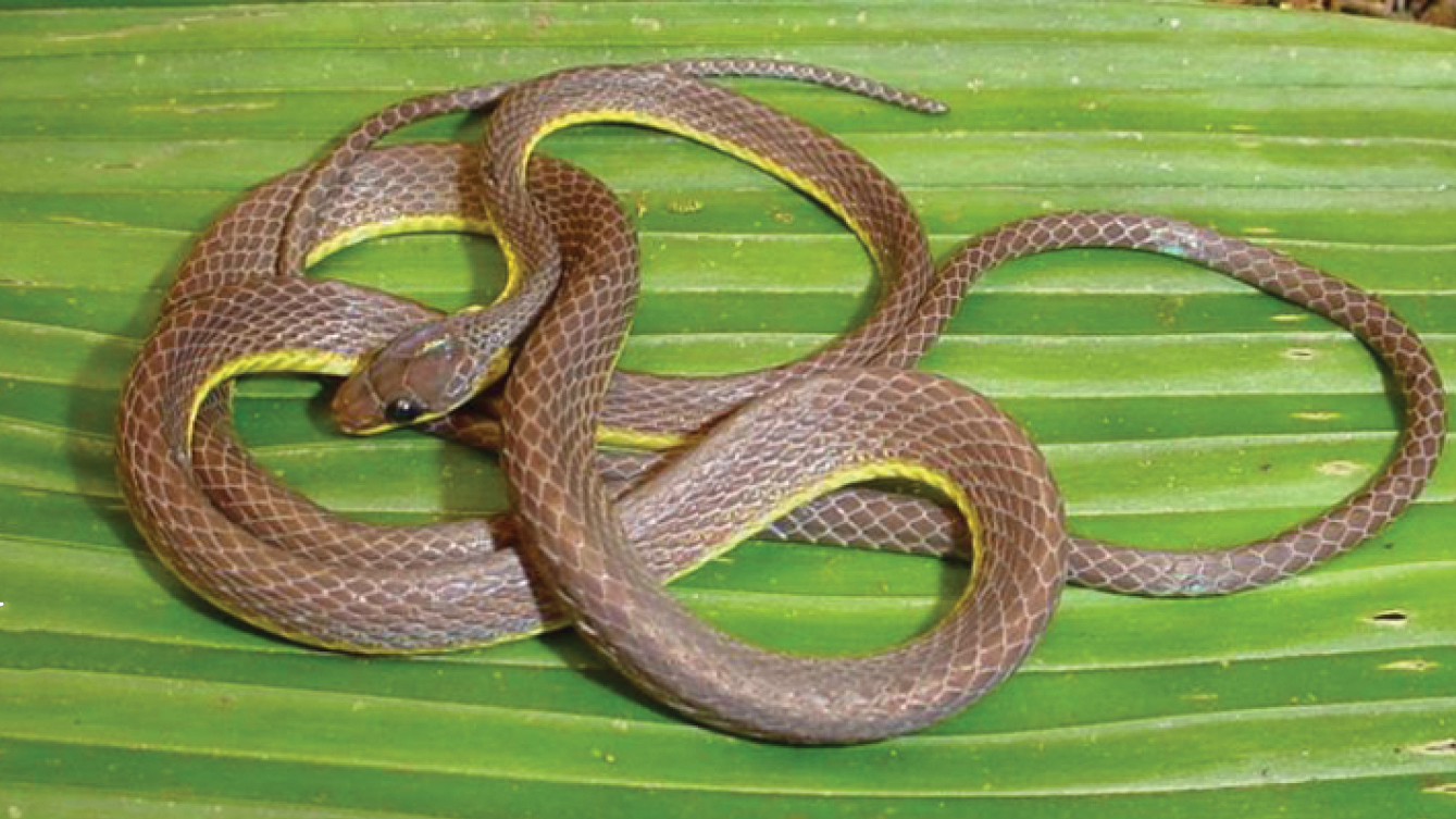 snake eyes meaning