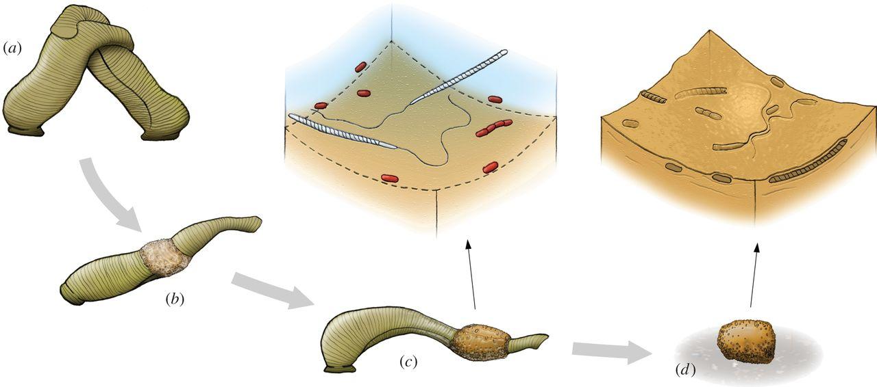 sperm preserved How