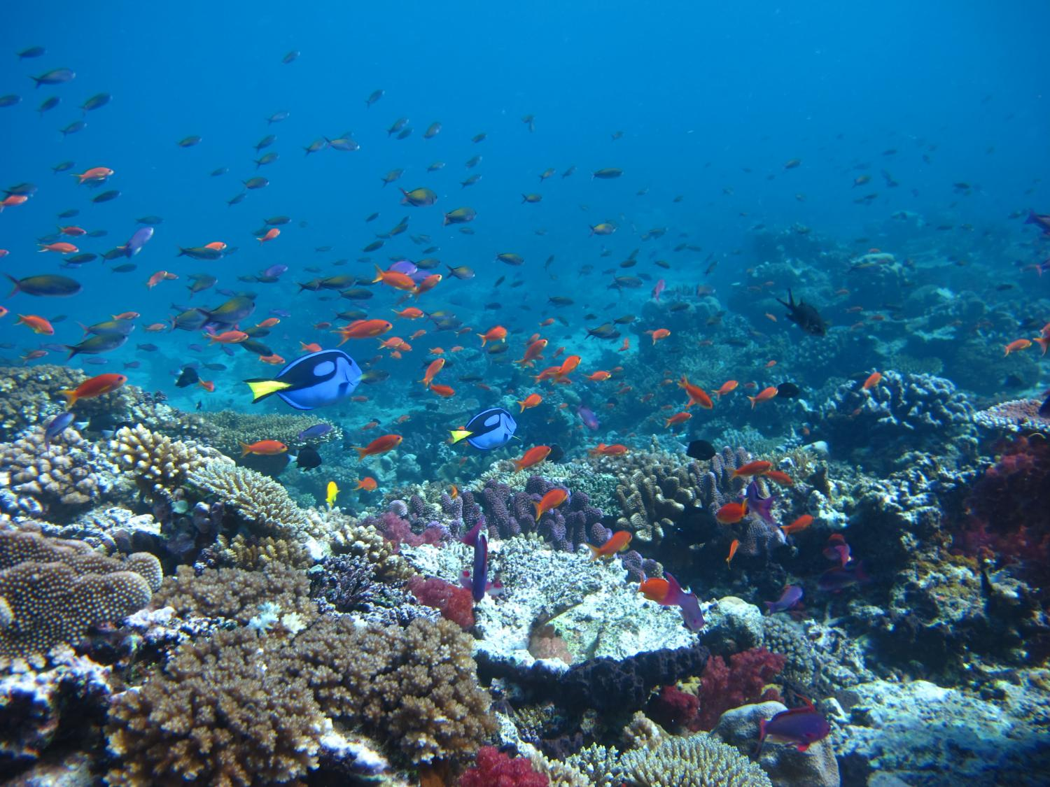 Fishing impacts on the great barrier reef for Great barrier reef fish