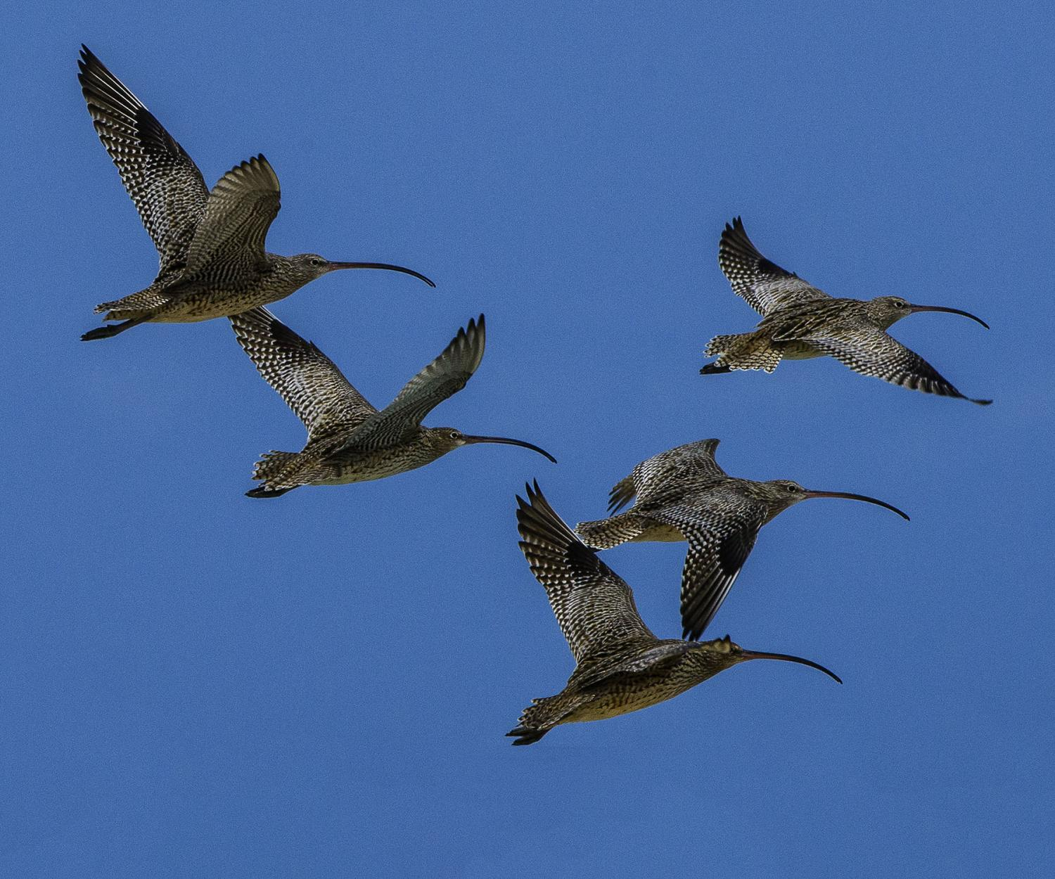 Migratory birds 'lack world protection'