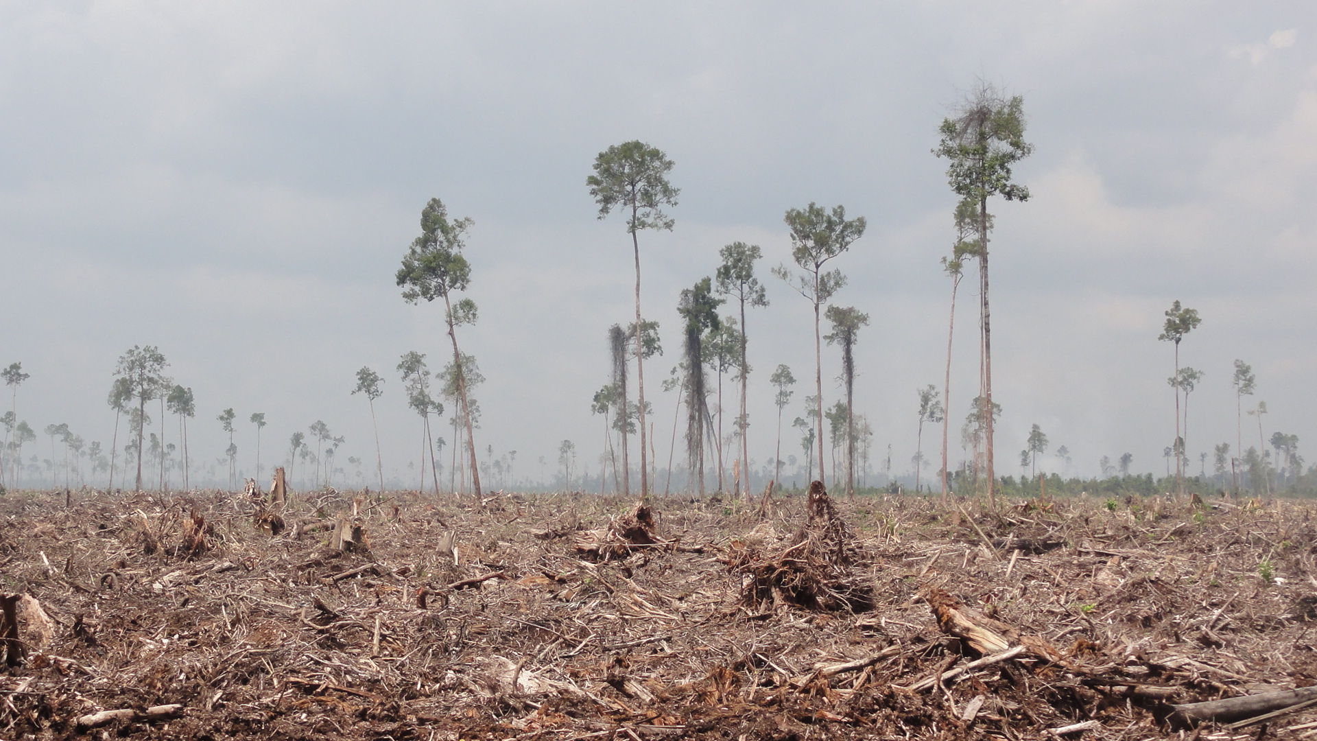 rainforest deforestation Introduction deforestation of the world's rainforests has numerous impacts on the environment and is occurring at alarming rates as a result, species extinction has become a daily occurrence.