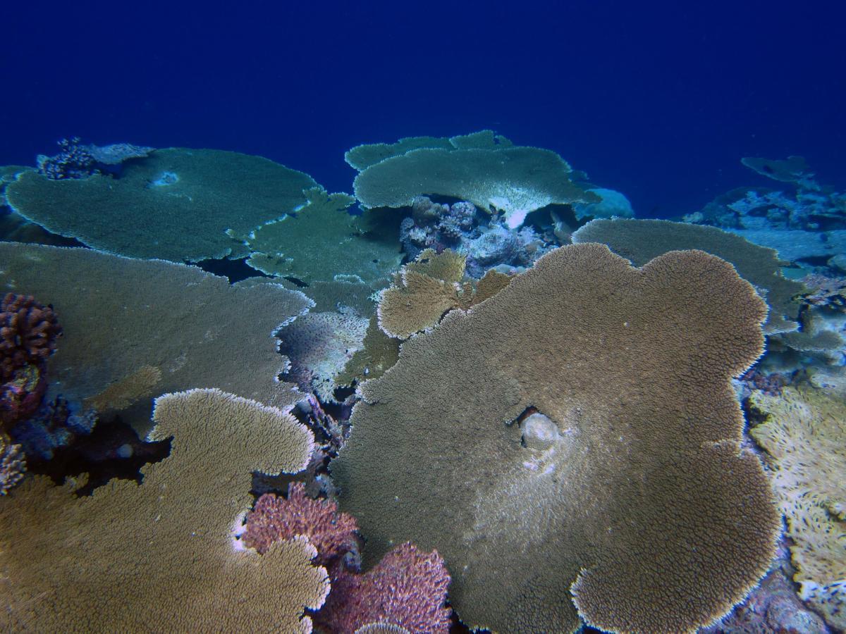 coral bleaching in indian ocean pdf