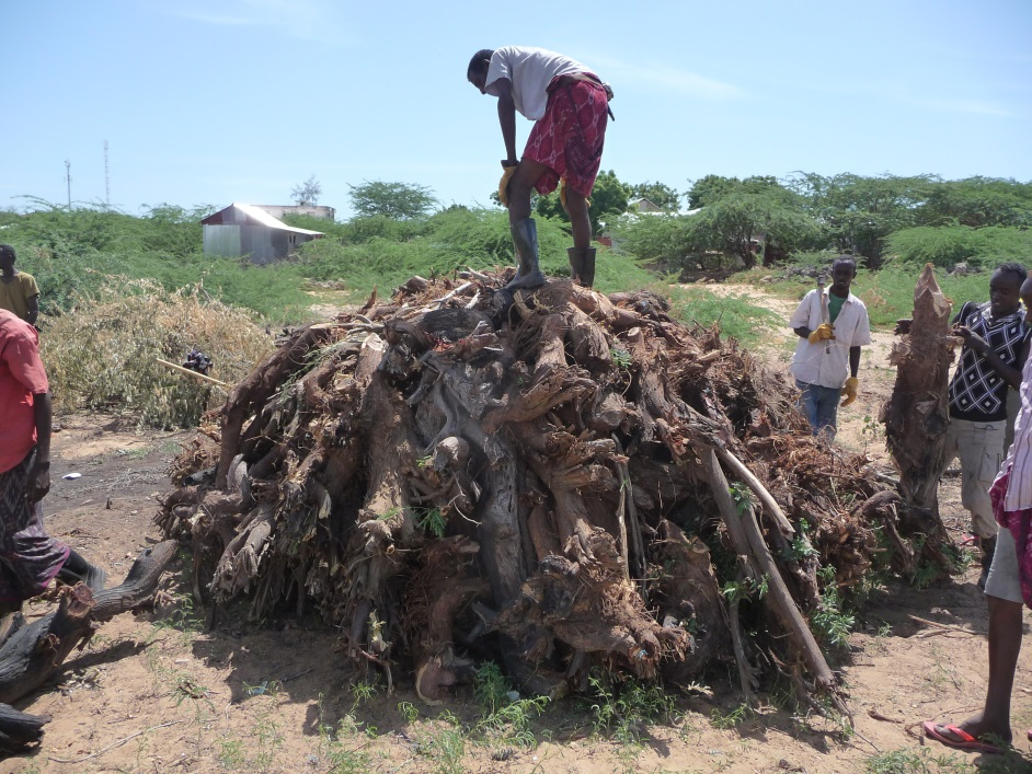 Study charcoal production by al shabaab increases in survey area