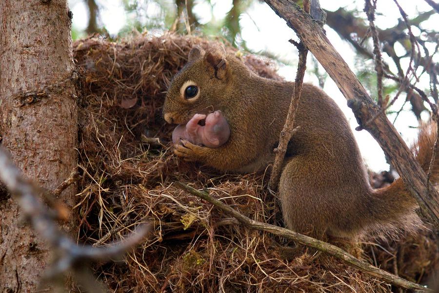 nurture vs nature research paper