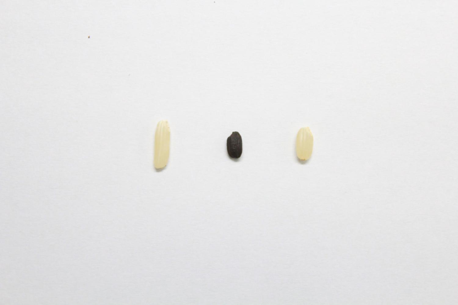 Every grain of rice: Ancient rice DNA data provides new view of domestication history