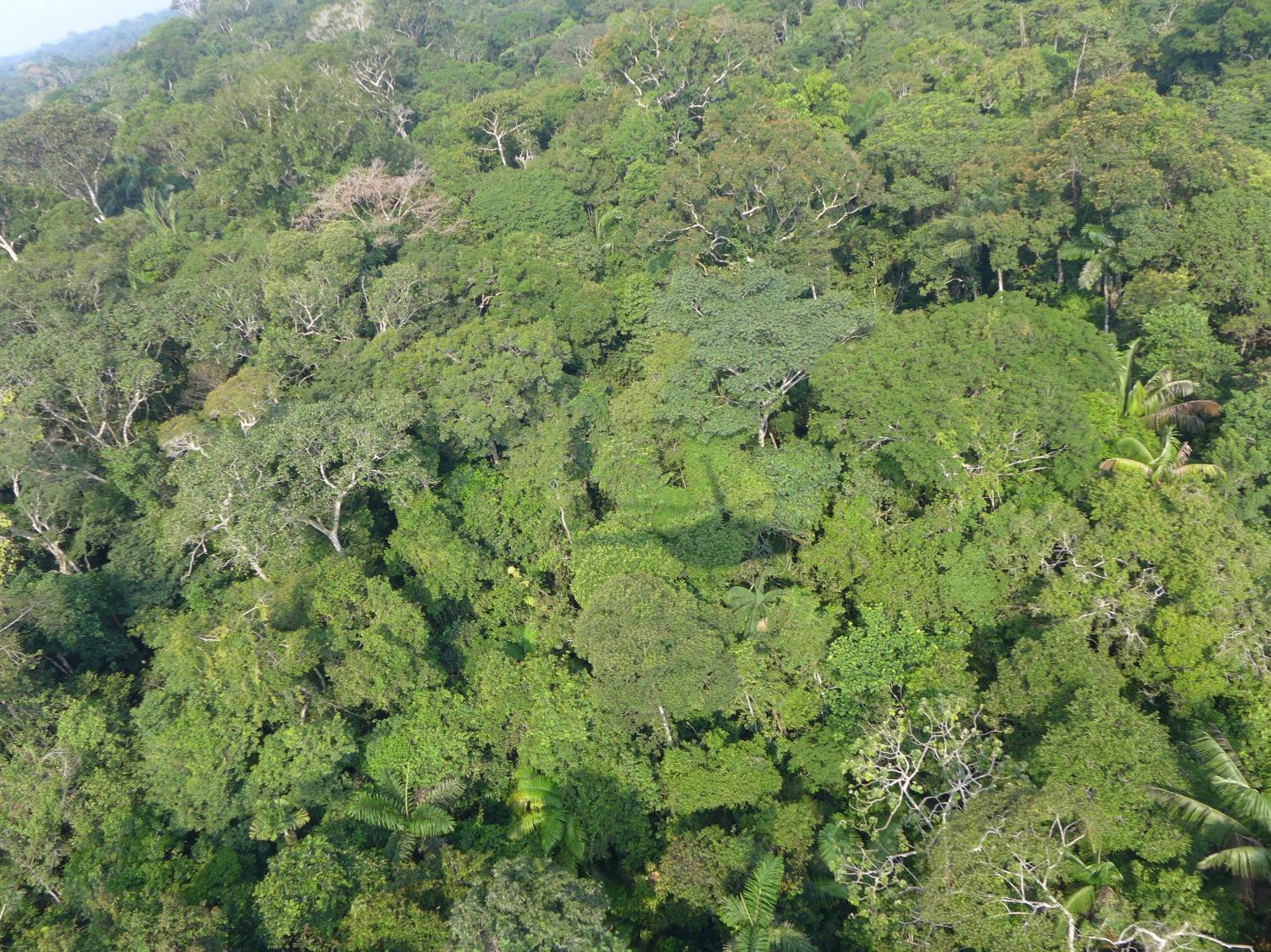 Amazon rainforest has from rare to very rare species of trees