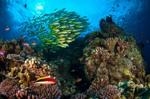 Report eyes global warming threats to World Heritage sites