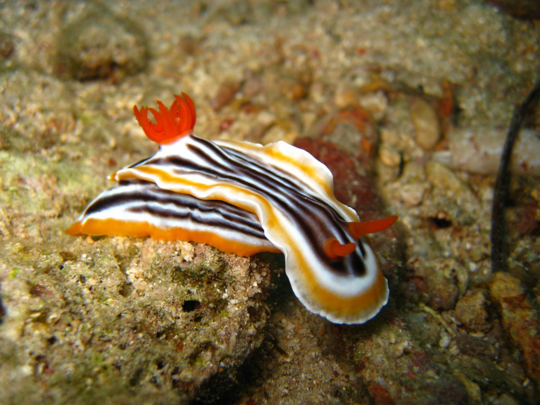 Small but deadly: The chemical warfare of sea slugs
