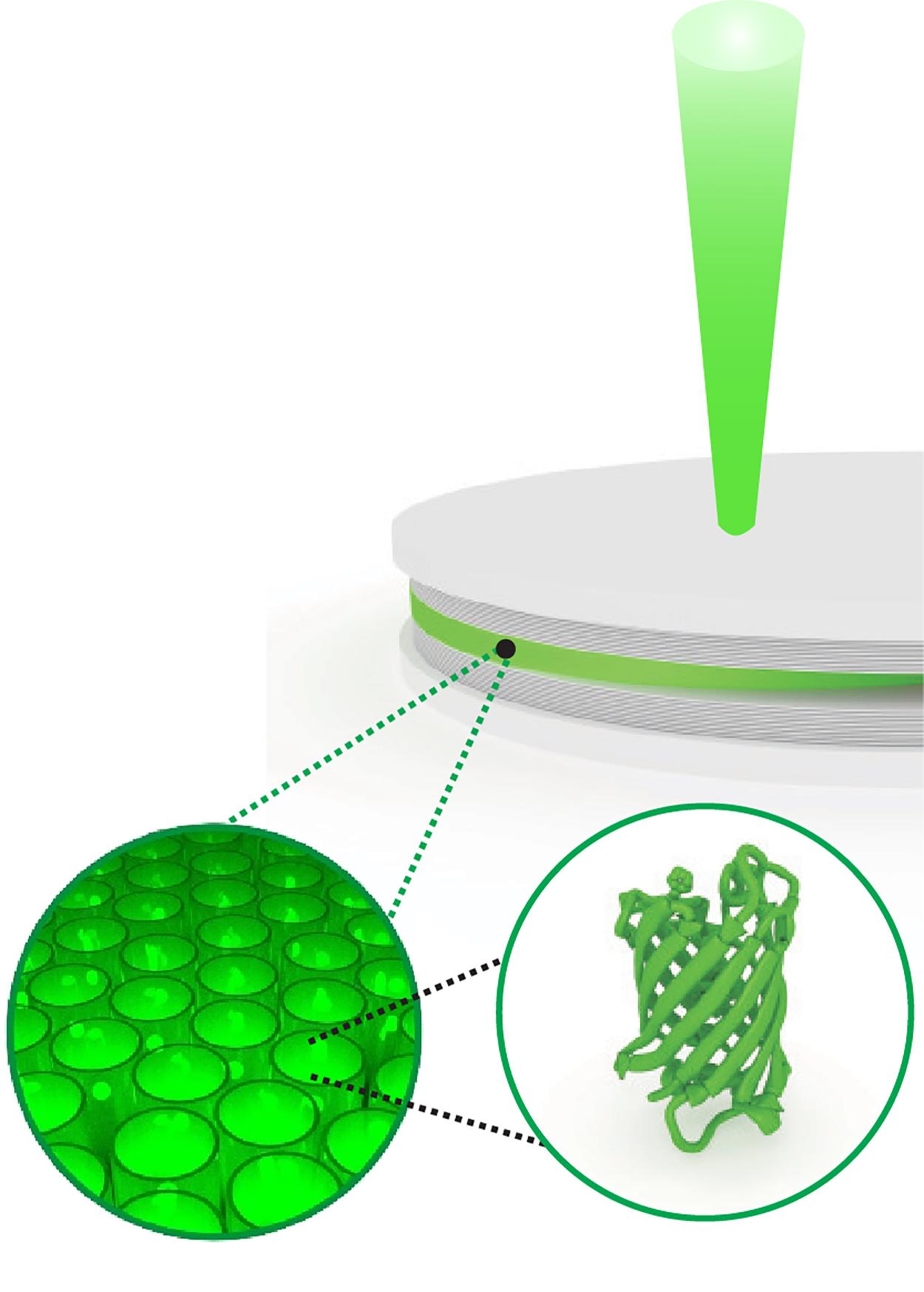 Jellyfish proteins used to create polariton laser