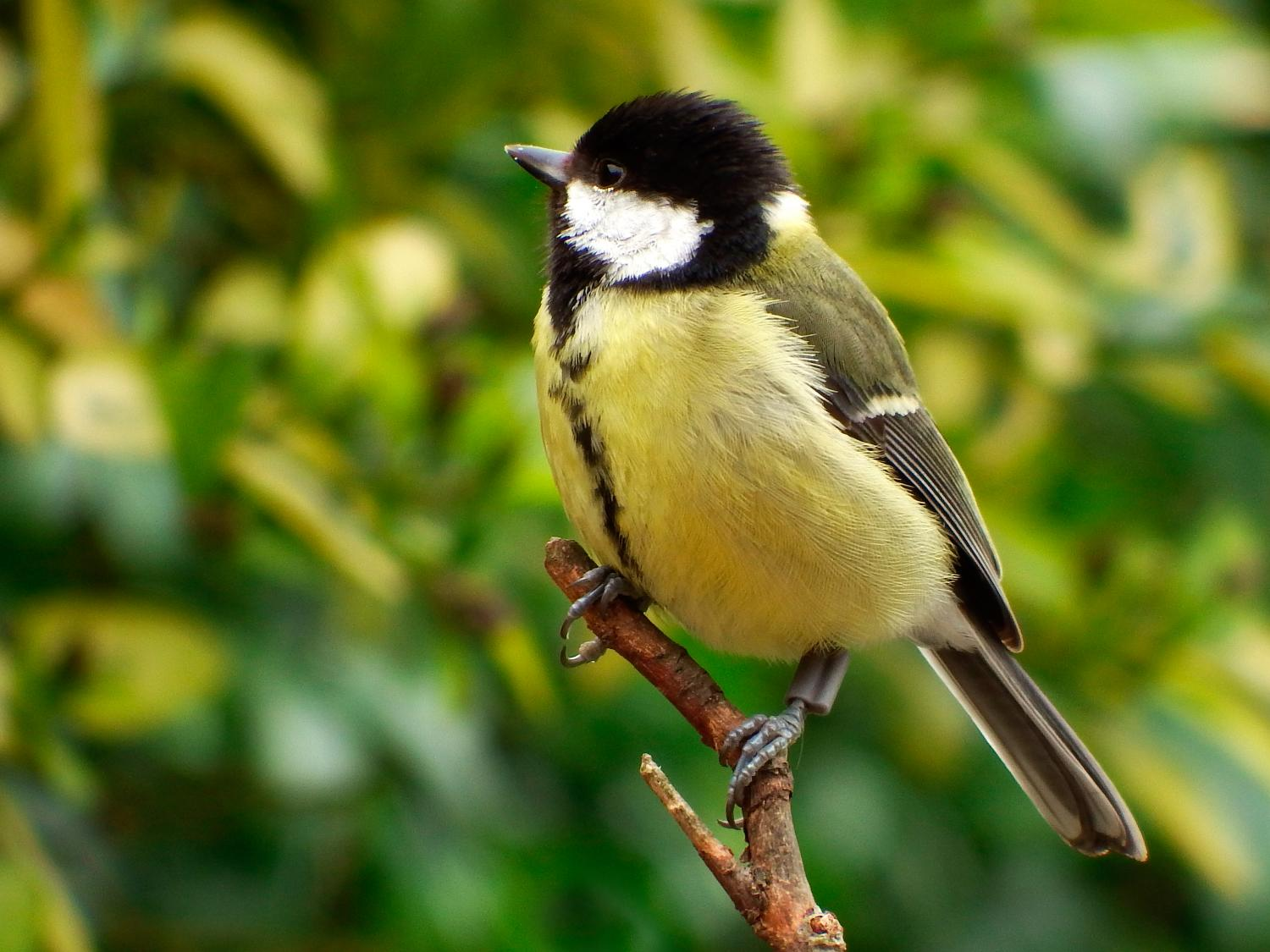 Birds choose spring neighbors based on winter 'friendships' Zoology Pictures Animals
