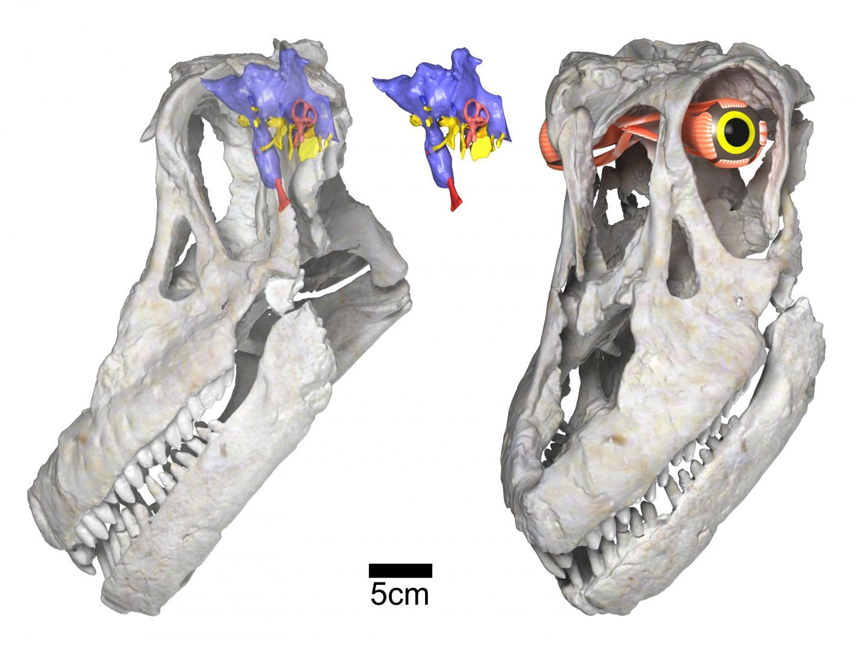 Newly discovered titanosaurian dinosaur from Argentina ...