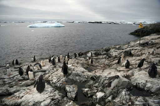 Countries agree on huge marine reserve for Antarctica
