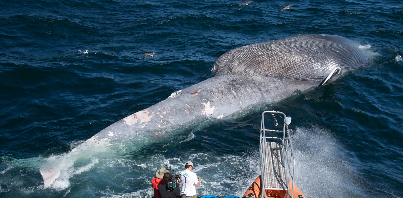 As Australian shipping grows, how can we avoid collisions with marine animals?