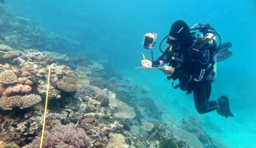 Great Barrier Reef 'not dying', Australia insists
