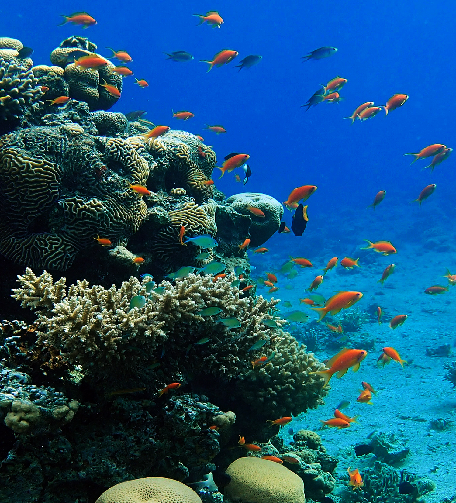 Coral Reefs Highlight The Key Role Of Existing