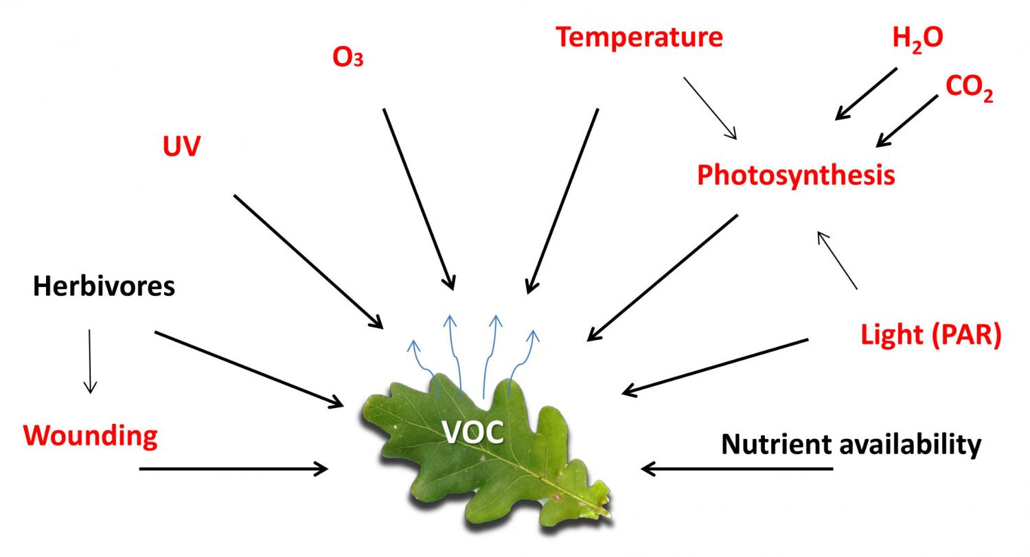 plant volatile chemistry Plant-produced volatile organic compounds article by:  are formed in the plant cell's cytosol and endoplasmic reticulum  chemistry computing & information .