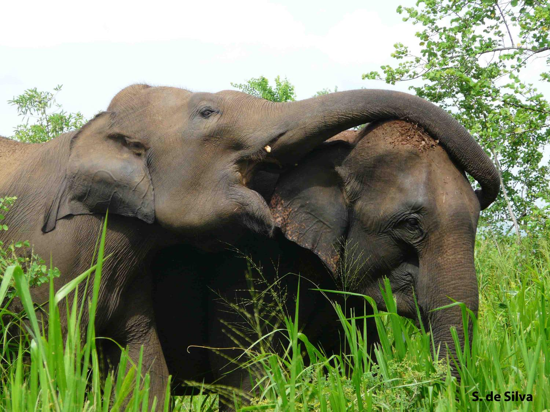 Elephant DNA damage control