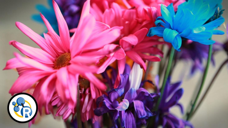 Video how to make cut flowers last longer - Ways to make your flowers last longer ...